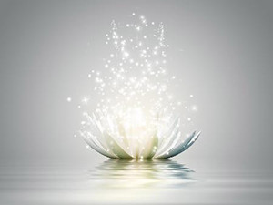lotus flower with sparkling light