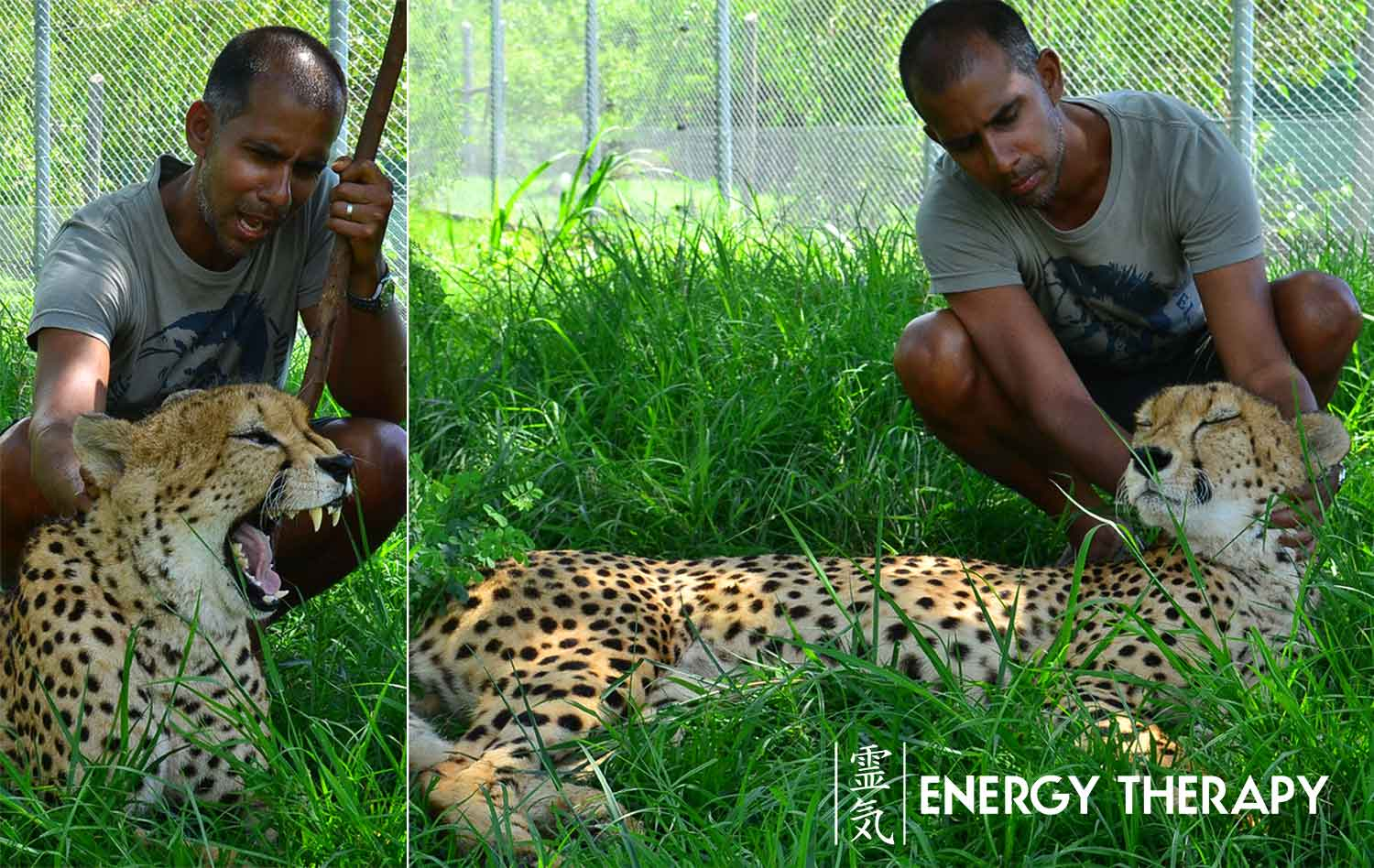 esp and animal communication - jaime tanna and cheetah massage