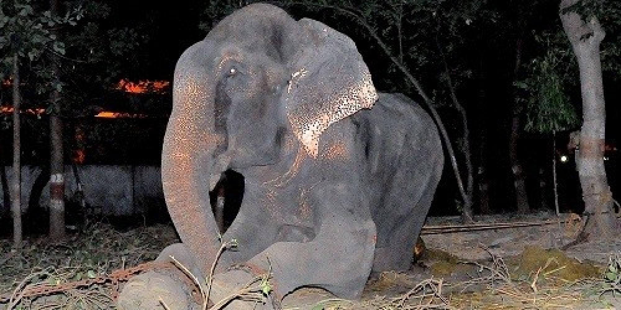 raju elephant rescued