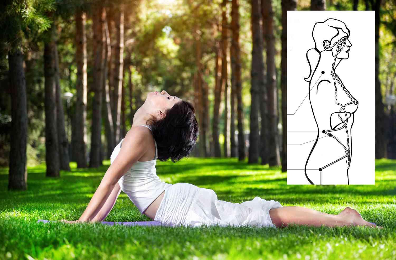 dreamstime_bhujangasana_cobra_pose_with_meridian_insert_28526911_opti