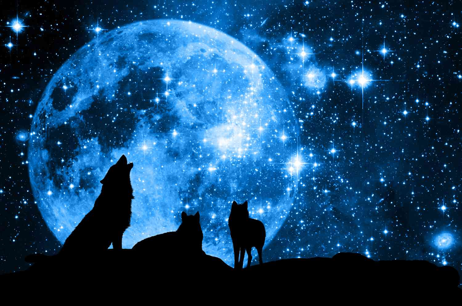 A Story of Two Wolves