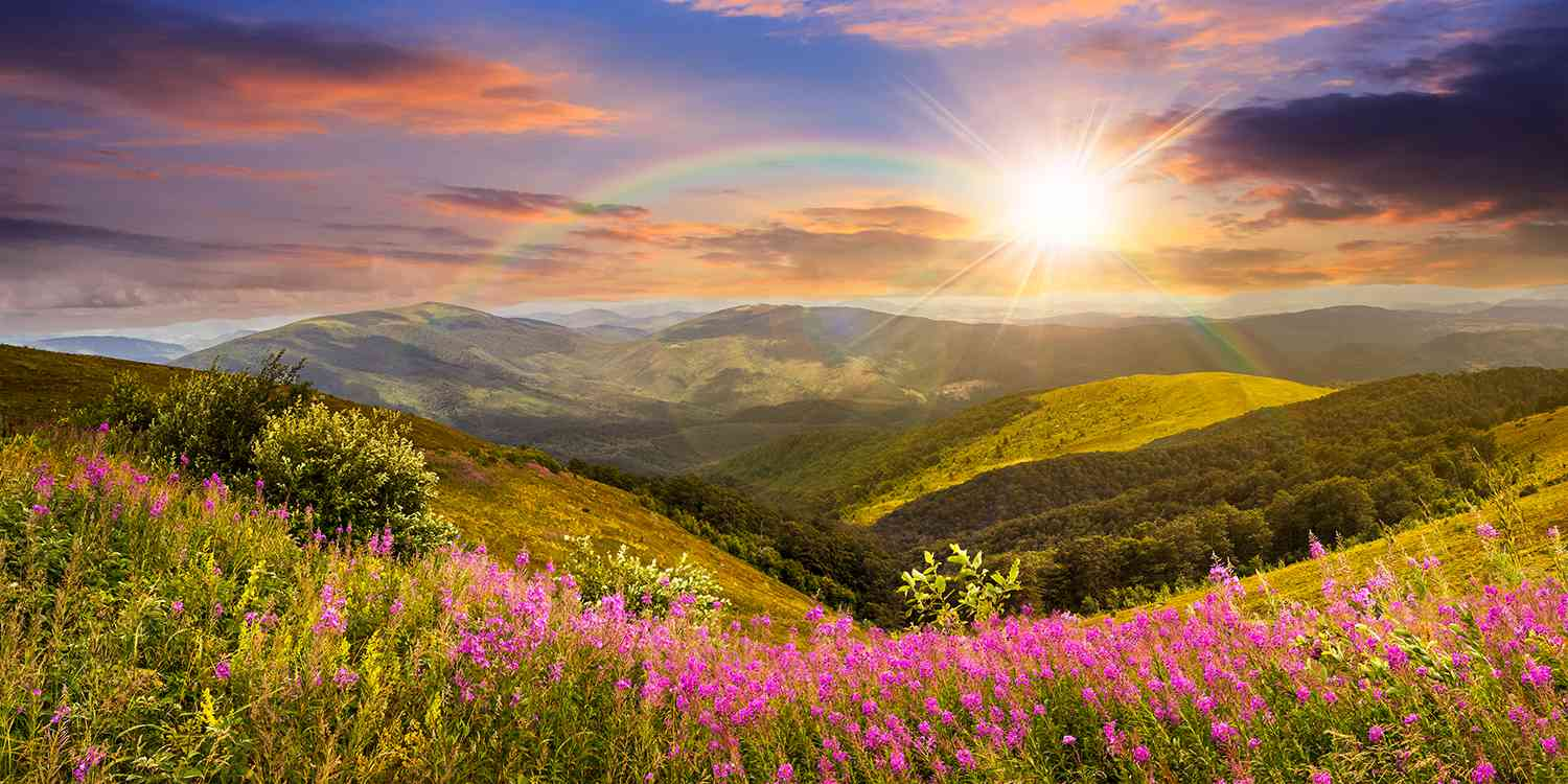 wild flowers on mountain top with sun setting