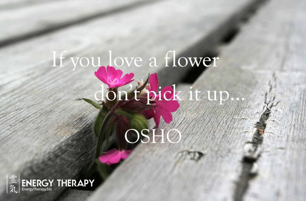 """If you love a flower, don't pick it up."" Osho"