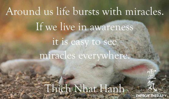 cute newborn lamb - signifying a miracle