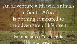 An adventure with wild animals…