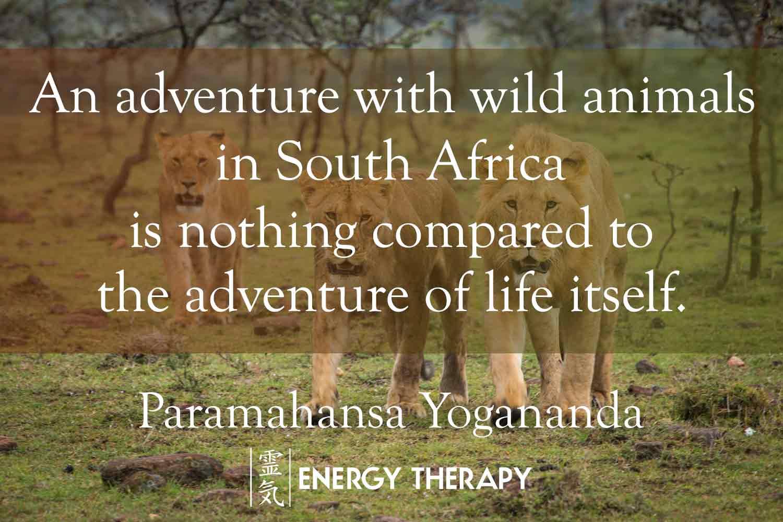paramahansa yogananda - an adventure with wild animals
