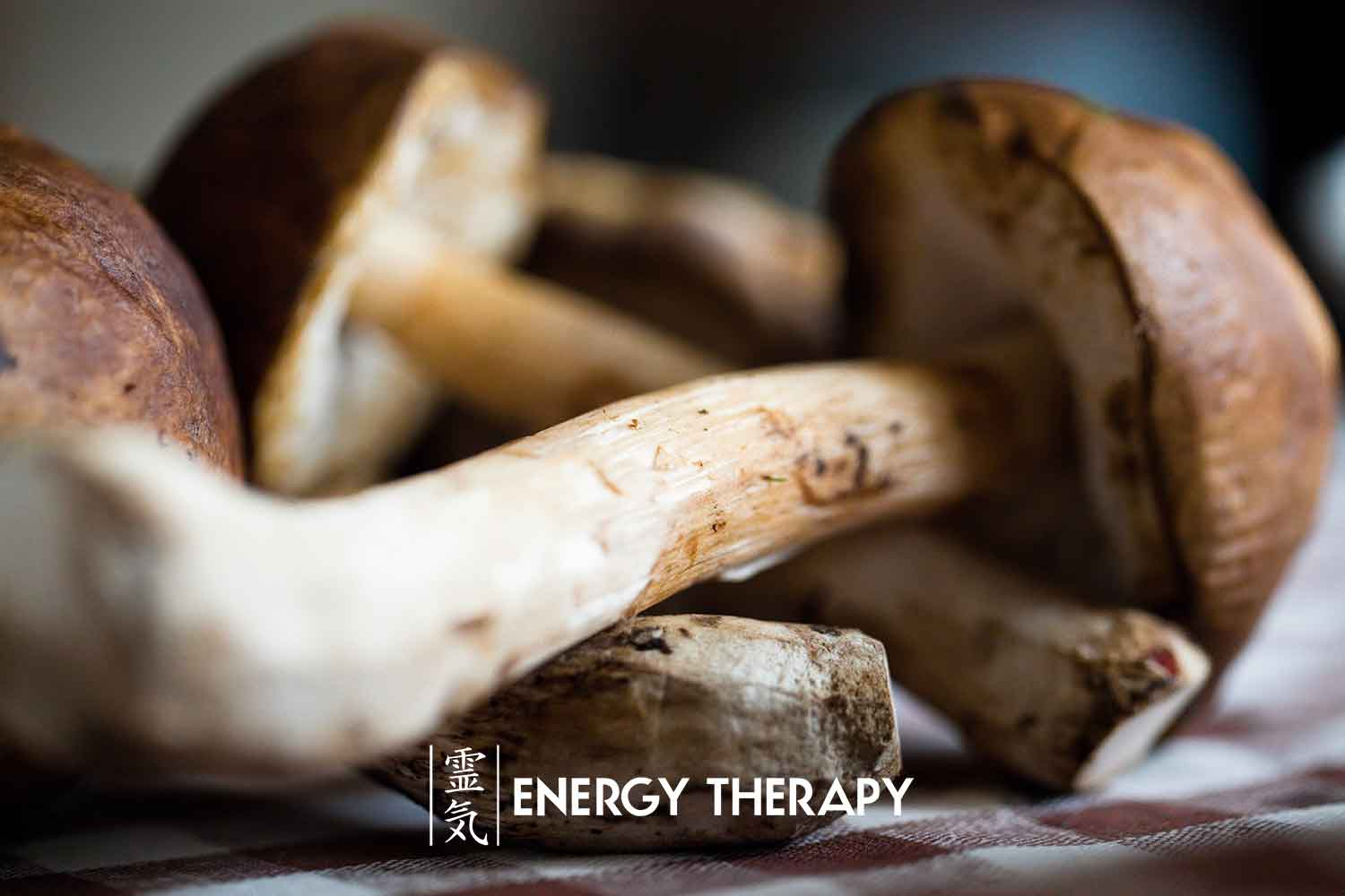 the healing mushroom therapy guide