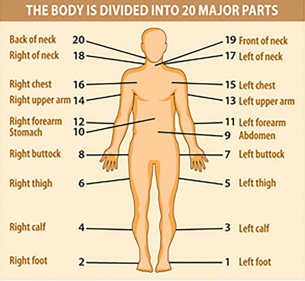 yogoda - body divided into 20 major parts - opti