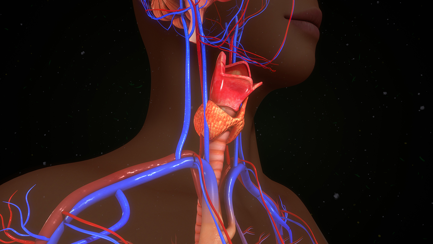 the thyroid's unknown true purpose