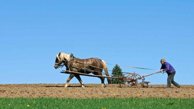 Zen Buddhist Story: The Farmer's Son