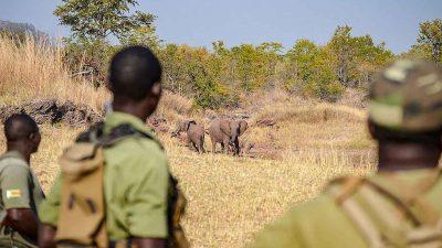poaching unit africa