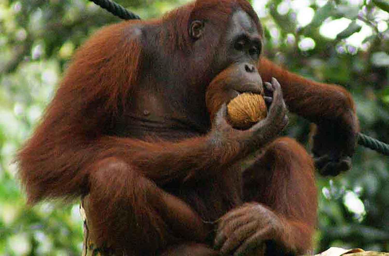 Are humans natural herbivores or omnivores?