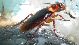 How Messengers Appear In Our Daily Lives: Cockroach Symbolism & Meaning