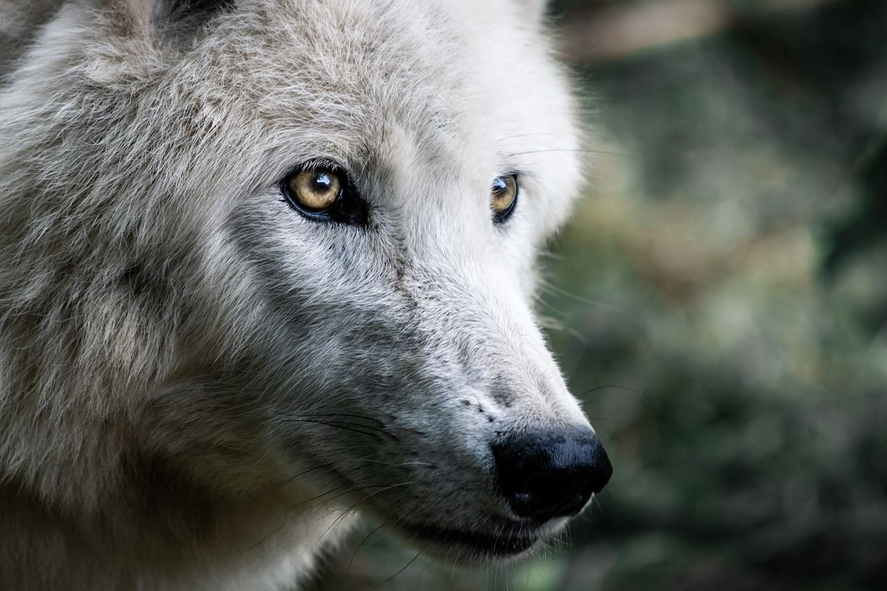 The Cherokee Story of Two Wolves